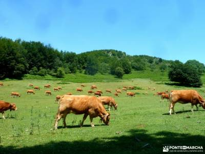 Sierra Toloño,Rioja Alavesa; pueblos serrania de ronda canto cochino la pedriza toledo rutas